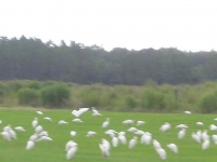 SS-Palatka-birds_1024x768.jpg