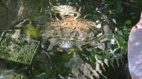 Turtles in Key West at Pier Hotel 4_1024x575.JPG