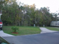 Dec 2012 Tropical Palms (53).JPG