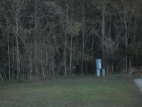 Dec 2012 Tropical Palms (56).JPG