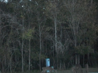 Dec 2012 Tropical Palms (61).JPG