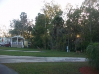 Dec 2012 Tropical Palms (63).JPG