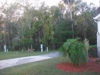Dec 2012 Tropical Palms (64).JPG